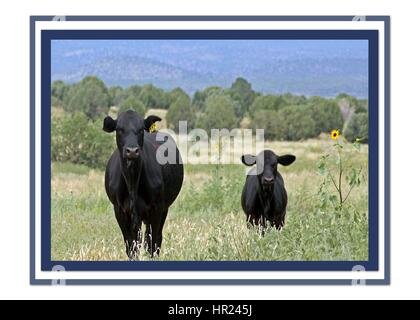 A PICTURE OF TWO ANGRY LOOKING COWS - Stock Photo