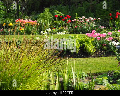 Chenies Manor Sunken garden in tulip time;  a beautiful May evening with sunshine and fresh green plant growth. - Stock Photo