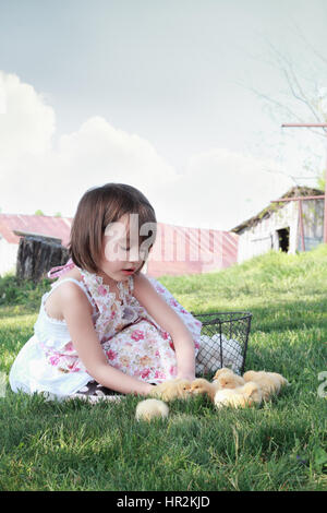 Little girl watching young yellow chicks  with chicken coop and barn in far background. Extreme shallow depth of - Stock Photo