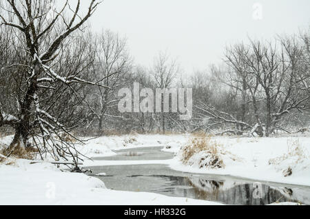 snow storm - Stock Photo