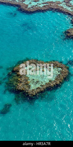 Coral Reef, Heart Reef, part of Hardy Reef, Outer Great Barrier Reef, Queensland, Australia - Stock Photo