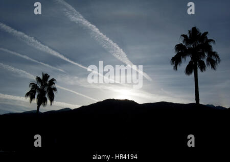 Palm trees and mountains at sunset in Palm Springs - Stock Photo