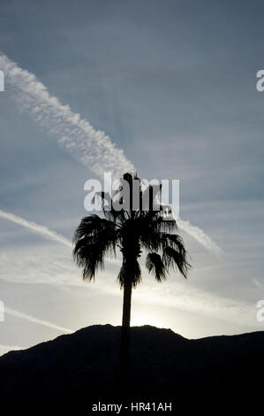 Palm tree and mountains at sunset in Palm Springs - Stock Photo