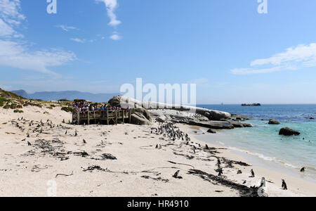A group of tourist enjoying watching a penguin colony on Boulders beach, Western Cape, South Africa. - Stock Photo