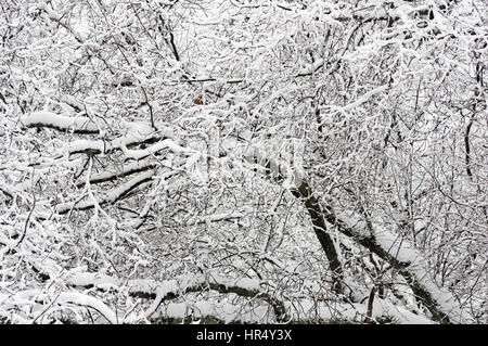snow covered leafless branches in the winter - Stock Photo