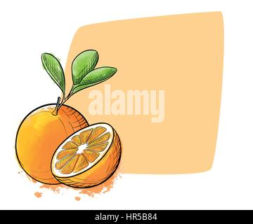 Hand drawn watercolor painting orange on white background. Sketch food vector illustration - Stock Photo
