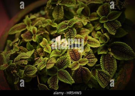 The Green Beauty - Stock Photo