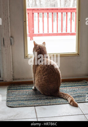 Cat sitting in front of the glass door and looking out - Stock Photo