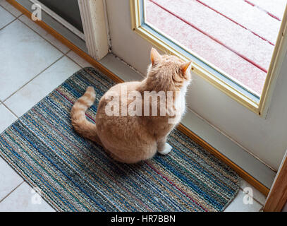 Cat sitting in front of glass door and looking out - Stock Photo