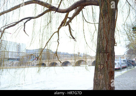 A yellow green weeping willow tree in the middle of the River Seine, Paris - Stock Photo