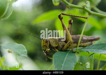 locusts ate - Stock Photo