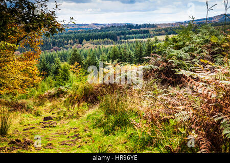 View over the Forest of Dean in Gloucestershire. - Stock Photo