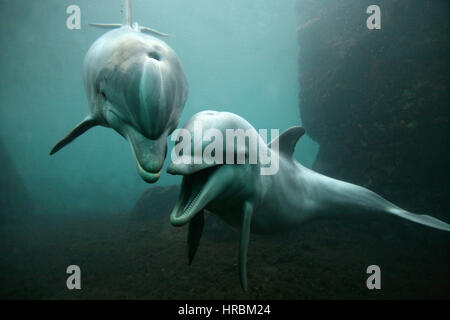 dolphines in zoo park - Stock Photo