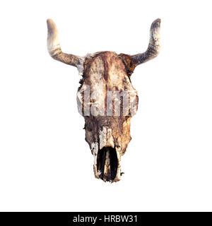 cow skull isolated on white - Stock Photo
