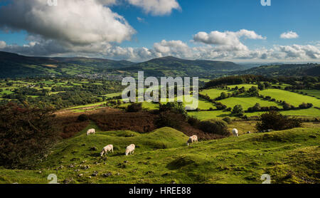 View towards Sugar Loaf from Llangattock Escarpment, Brecon Beacons National Park - Stock Photo