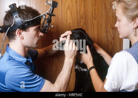 Checking Dog's Eyes With a Slit Lamp - Stock Photo