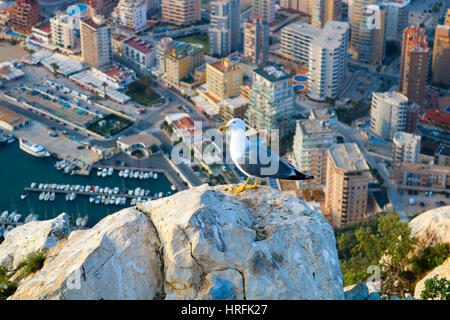 Seagull on the Ifach, Calpe - Stock Photo