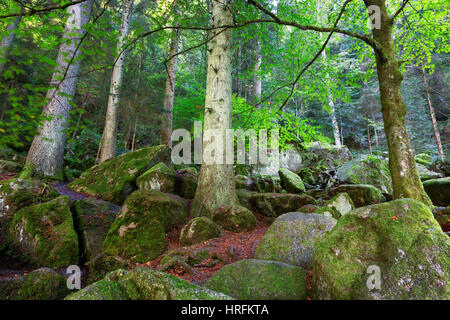 Moss covered boulders and trees, Black Forest, Germany - Stock Photo