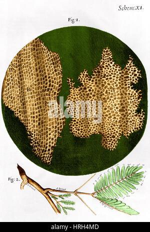 Illustration of cork wood cells - Stock Photo