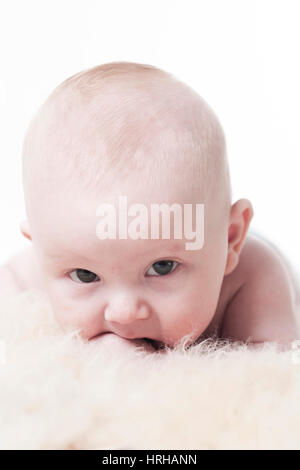 Model released, Babyportrait, Bub 3 Monate - baby in portrait - Stock Photo
