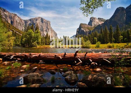 Fallen tree, Merced River, Yosemite Valley - Stock Photo