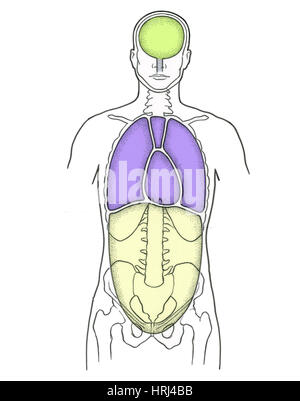 Illustration Of Anterior Body Cavities Stock Photo 135006573 Alamy