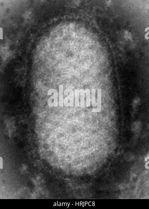 Orf Virus, TEM - Stock Photo