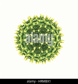 Pollen grain isolated on white , Pollen allergy is also known as hay fever or allergic rhinitis