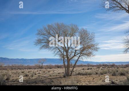 Tree stands on flat plain of Mojave Desert.