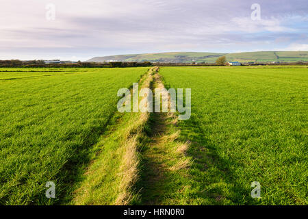 The footpath and boundary mound at Braunton Great Field, Braunton, Devon, England. - Stock Photo