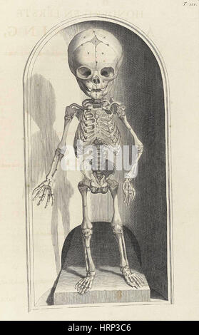 Anatomia humani corporis, Table 101, 1690 - Stock Photo