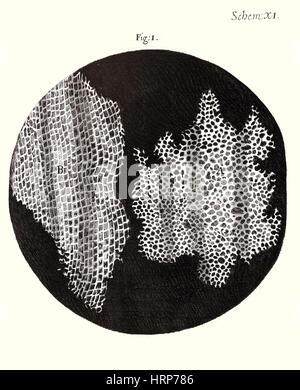 Cork Wood Cells, Hooke's Micrographia, 1665 - Stock Photo