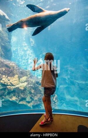 6 year-old girl watching fishes in an aquarium. - Stock Photo