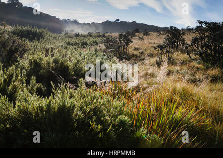 Horton Plains National Park, Sri Lanka - Stock Photo