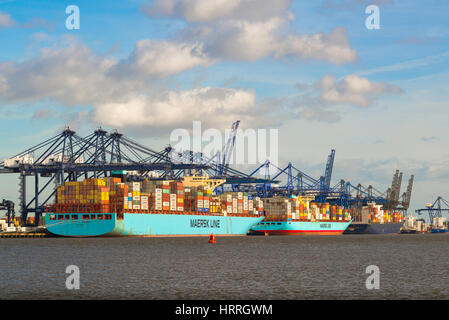 Container ships being unloaded at the largest container port in the UK, Felixstowe docks, England. - Stock Photo