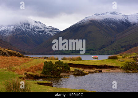 Herdwick sheep, Wastwater, Wasdale, Lake District National Park, Cumbria, England UK - Stock Photo