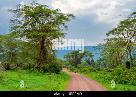 Mountain african forest with acacia and lush bushes in Ngorongoro national park, Tanzania - Stock Photo