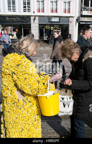 Marie Curie Charity Daffodil Appeal woman daffodils collecting donations street Truro Cornwall UK - Stock Photo