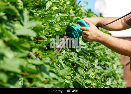 Cutting a hedge with electrical hedge trimmer - Stock Photo