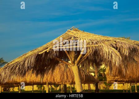 Tops of old beach umbrellas made of natural materials isolated over blue sky background. Photo shot at sunrise time. - Stock Photo