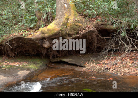 Uprooted - Stock Photo