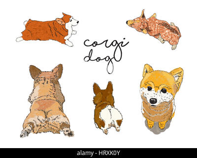 Corgi and Shiba dog illustration crated by without reference. - Stock Photo