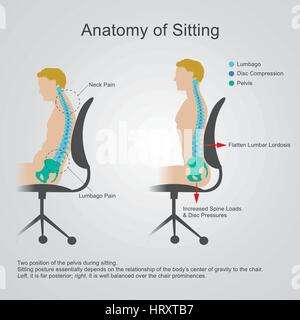 Anatomy of sitting The lumbar region is sometimes referred to as the lower spine, or as an area of the back in its - Stock Photo