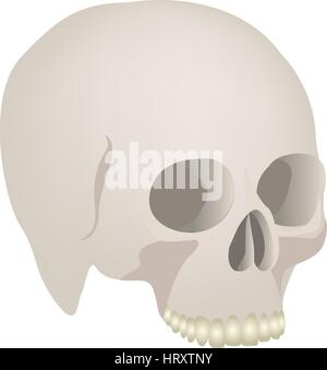 side view realistic human skull icon - Stock Photo