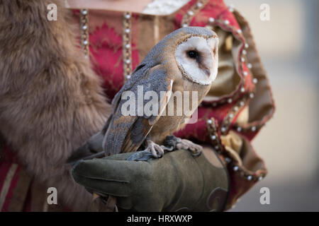 Falconry display at the medieval festival - Stock Photo