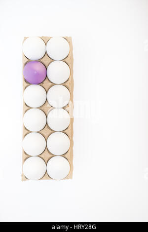One Easter egg dyed lavender or lilac and eleven white hen's eggs in a tan cardboard carton against white from above - Stock Photo