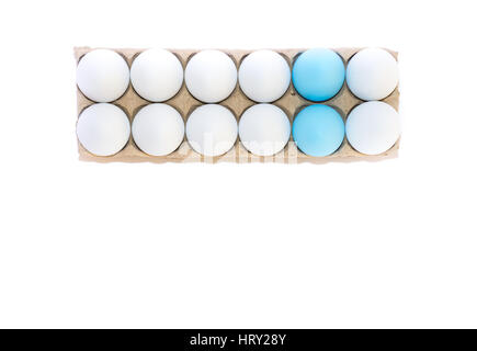 Two Easter eggs dyed robin's egg blue and ten white hen's eggs in cardboard carton from above against a white background - Stock Photo