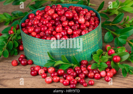 Cranberries close-up. Green basket with fresh cranberries lingonberries on old wooden background - Stock Photo