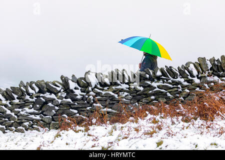 A person taking shelter under a multicoloured umbrella as they walk along a dry stone wall covered in snow, Flintshire, - Stock Photo