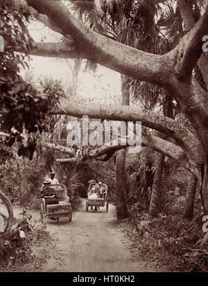 Palm Beach chariots, wicker-chaired rickshaws later referred to as afromobiles, on wooded trails in Palm Beach, - Stock Photo